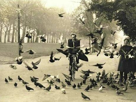 SGY Bike Birds